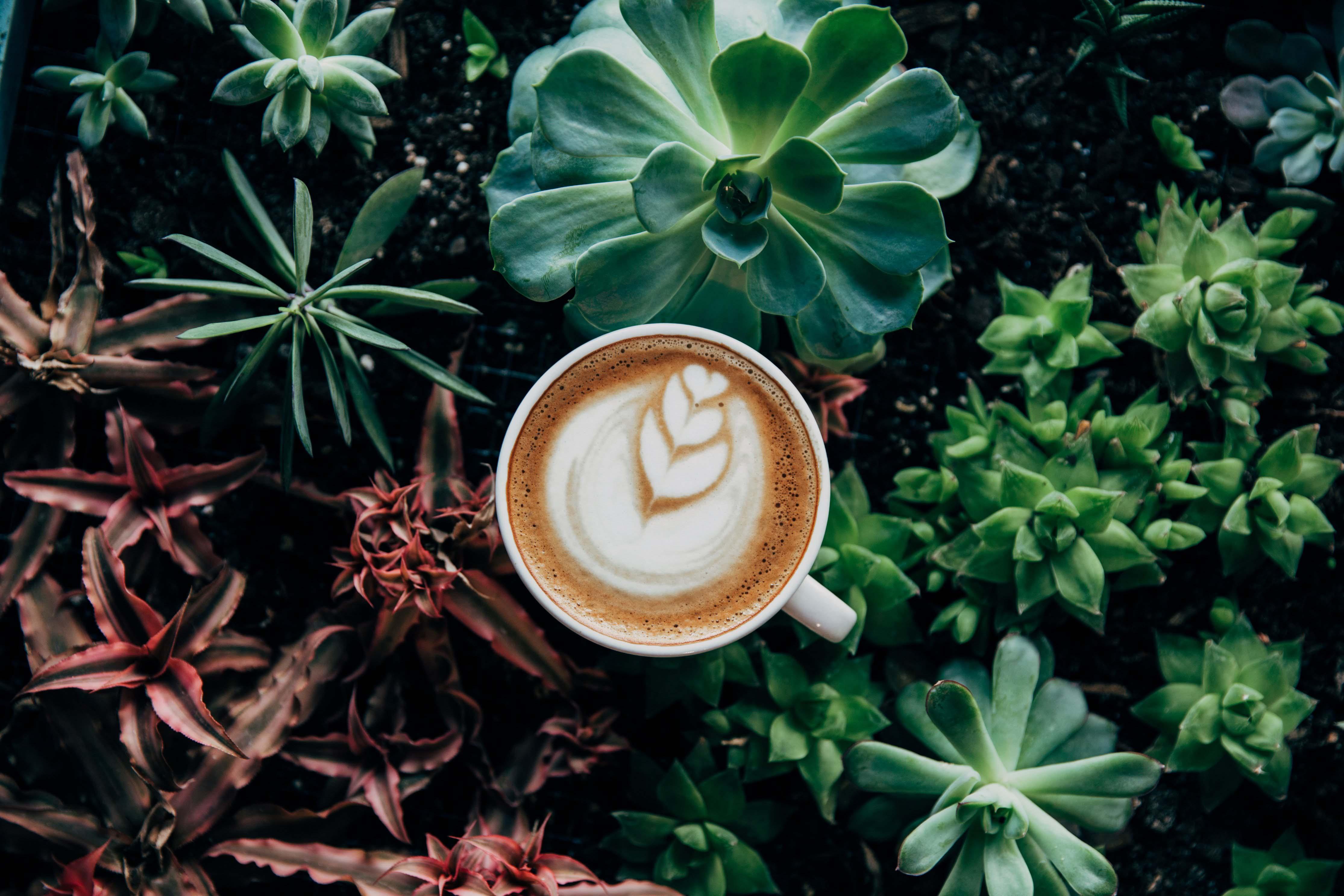 Café dans la nature